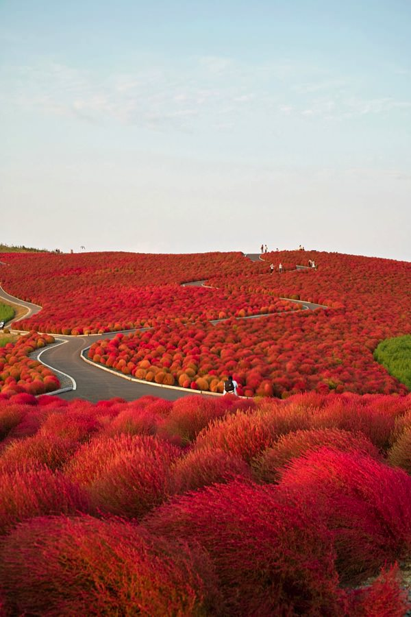 allabout.gr Απίστευτα μέρη Παραθαλάσσιο πάρκο Hitachi, Ιαπωνία Hitachi Seaside Park, Japan