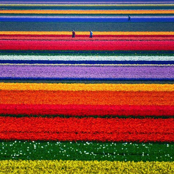 allabout.gr Απίστευτα μέρη Εκτάσεις με τουλίπες, Ολλανδία Tulip Fields in Netherlands