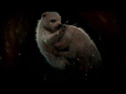 allabout.gr αγέννητα ζώα στην μήτρα της μητέρας τους ή στο αβγό τους