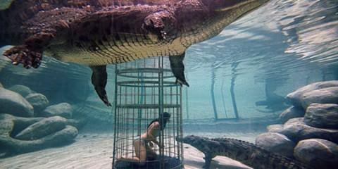Κολυμπώντας με τους κροκόδειλους allabout.gr