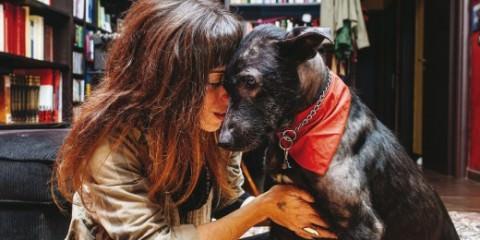 σκύλος που σώθηκε από βέβαιο θάνατο allabout.gr