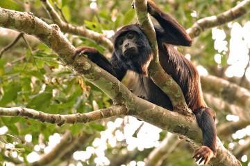 Τα 10 πιο θορυβώδη ζώα στον κόσμο!