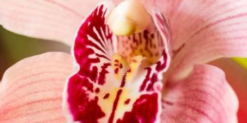 Οι 6 μεγαλύτεροι μύθοι για τον γυναικείο κόλπο vagina flower allabout.gr