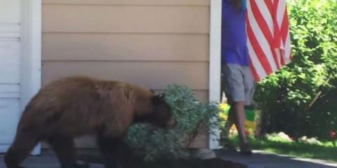 Άνδρας έρχεται αντιμέτωπος με αρκούδα