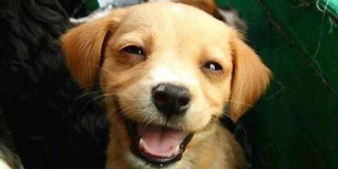 Σκύλοι με χαμόγελα μέχρι τα αυτιά