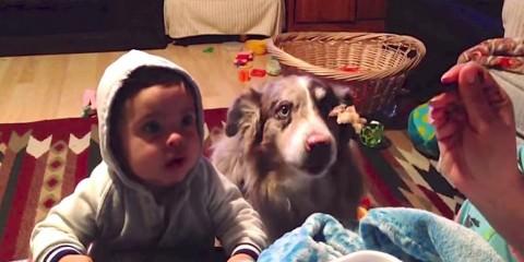 Σκύλος λέει «Μαμά», ενώ το παιδάκι δεν μπορεί το πει, κι όλα αυτά για μια μπουκιά φαΐ