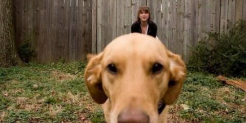 Σκύλοι γίγαντες...κατά λάθος