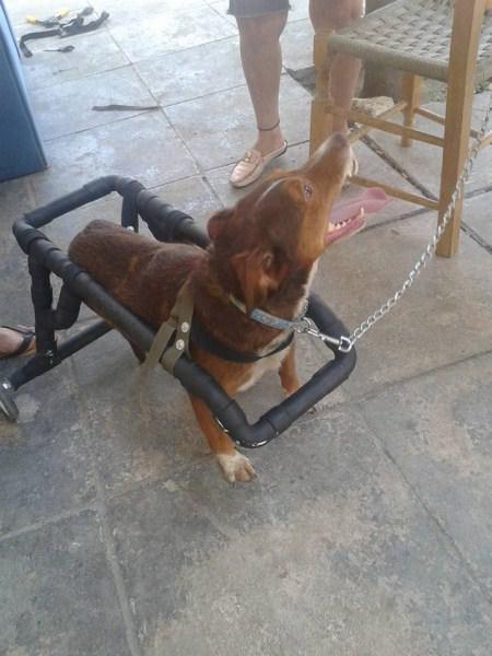 O Έλληνας υδραυλικός που κάνει ανάπηρα σκυλάκια να ξαναπερπατήσουν
