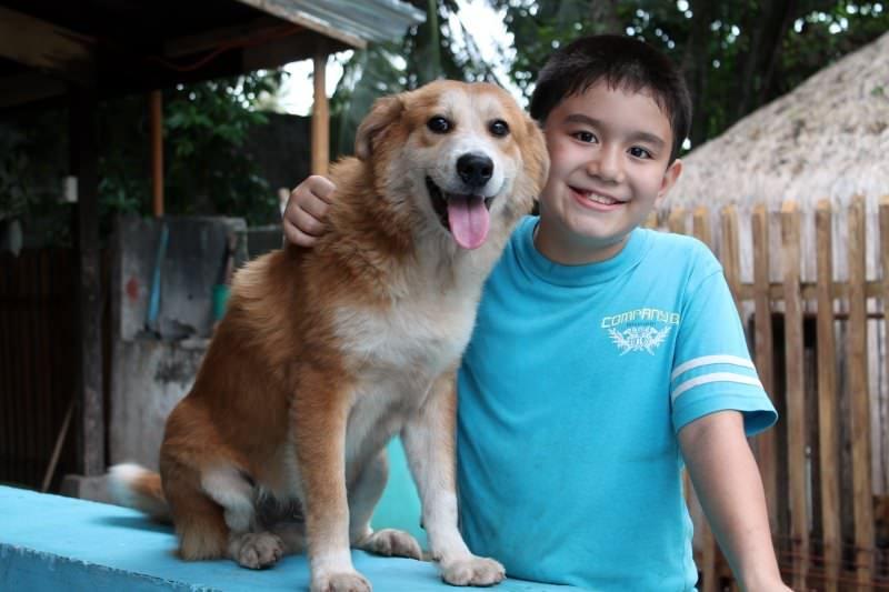 αγόρι βρήκε 6 αδέσποτα σκυλάκια
