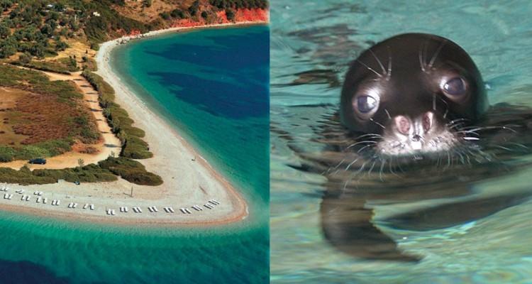 Η Αλόννησος το πρώτο νησί «χωρίς πλαστική σακούλα» στην Ελλάδα!