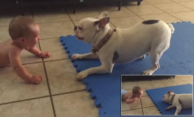 Μόνο όταν έχει ξεκαρδιστεί το μωρό σταματάει ο σκύλος, χαρούμενος που έκανε τη δουλειά του. Απίστευτο!
