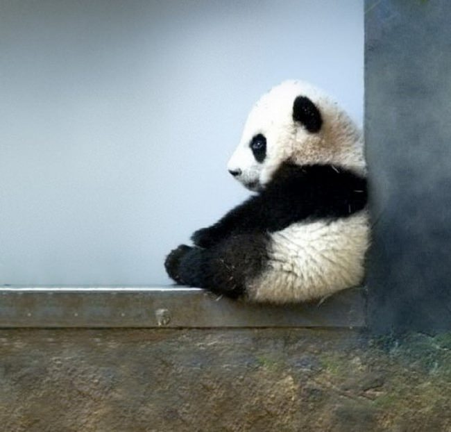 30 ενδιαφέροντα πράγματα για τα ζώα που δεν γνωρίζατε και θα σας ανεβάσουν την διάθεση