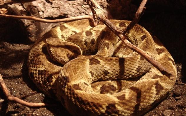 snake-island-brazilia Σε αυτά τα 7 μέρη του κόσμου η είσοδος απαγορεύεται