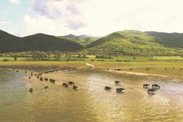 εναέριο βίντεο από λίμνη Κερκίνη με drone