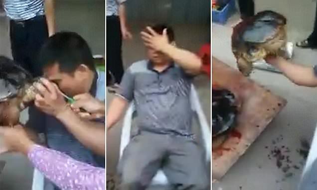Χελώνα δαγκώνει έναν άντρα στο φρύδι