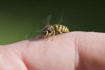 Τσίμπημα από σφήκα ή μέλισσα